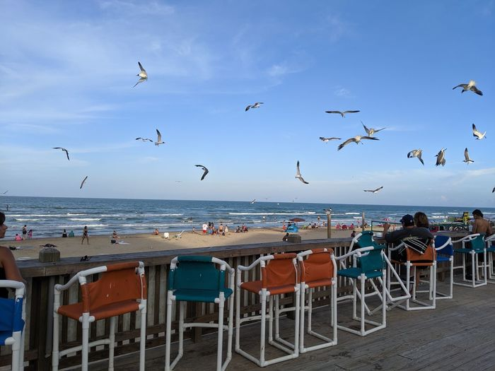 Seagulls flying over people at beach against blue sky