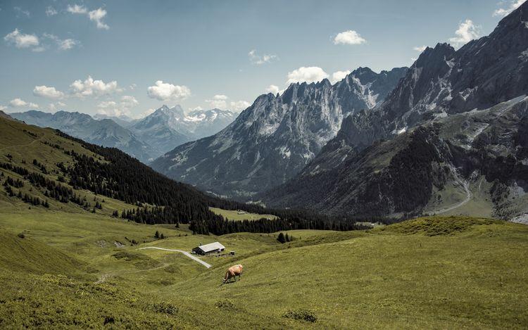 Engelhörner Cow Environment Grosse Scheidegg Landscape Mountain Mountain Peak Mountain Range Nature Outdoors Scenics - Nature Swiss Alps Tourism The Great Outdoors - 2018 EyeEm Awards