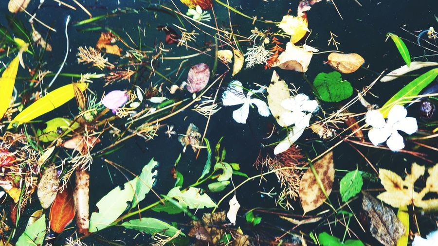 Wiesenblumen angeschwemmt in einer Pfütze Nature Morte Lake Garda Lake Water Dark Water Still Life Flowers Leaves Japanese  Drowned Leaves Puddle Flower Power Leaf Day Outdoors Plant Nature No People Close-up Beauty In Nature Fragility Flower