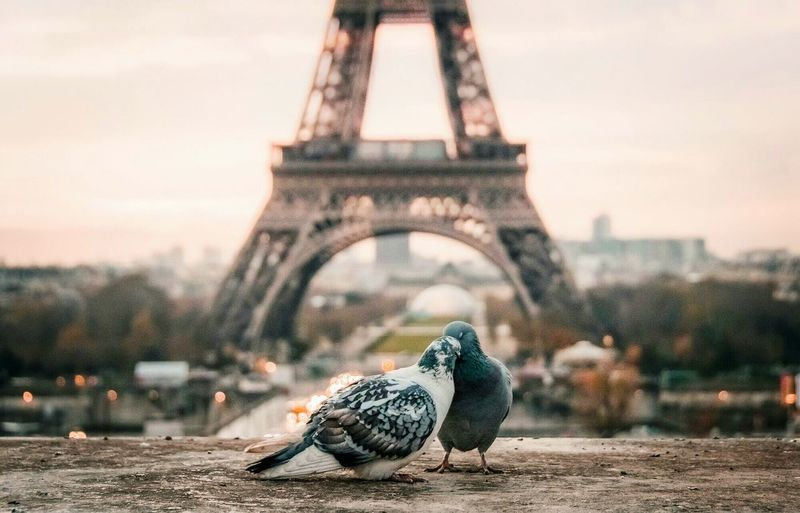 Pigeons perching on retaining wall against eiffel tower