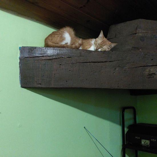Durmiendo bien a gustito😻 Cats Catslover Catsofinstagram Gatosdeinstagram Gatos Orangecatsrule Orange Orangecat Koreathecat Miau Meow Purr Purrfect Cute