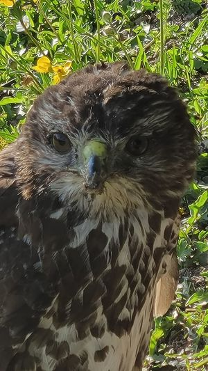 Close-up portrait of owl on field