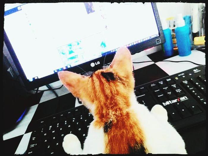 Cats Cat♡