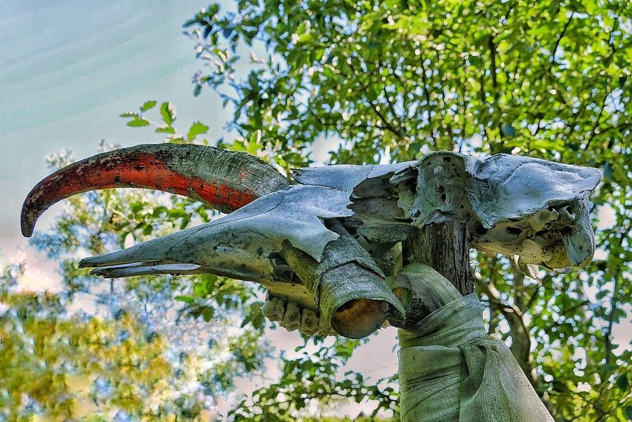 magic folklore Outdoors Thicket Reptile Animal Wildlife Tree Iguana Animals In The Wild Nature No People Day Animal Themes Branch Close-up
