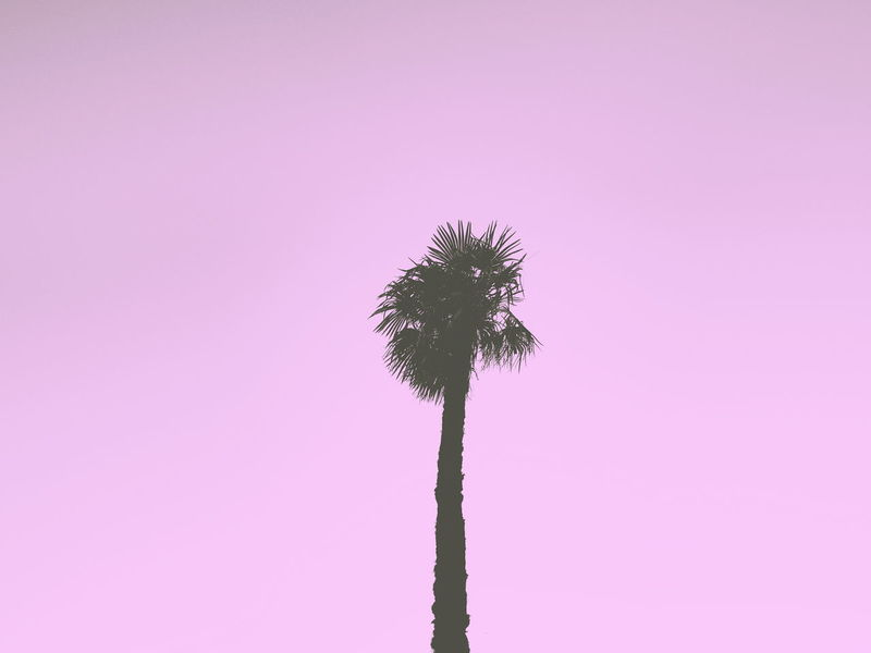 Portrait of a Palm Tree Headintheclouds Pink Dreaming Tree Silhouette Traveling Hugging A Tree Nature Colors Minimalism Beautiful Nature Showcase: February Aroundtheworld Negative Space Backtopink Colors Of Carnival Visual Trends SS16 - Bold Neons, Bright Pastels
