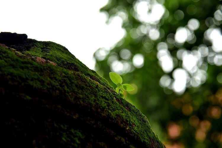 Nature Green Color Beauty In Nature No People Moss Outdoors Social Issues Leaf Defocused Close-up Plant Low Angle View Tree Day Sky Tree Area Freshness City