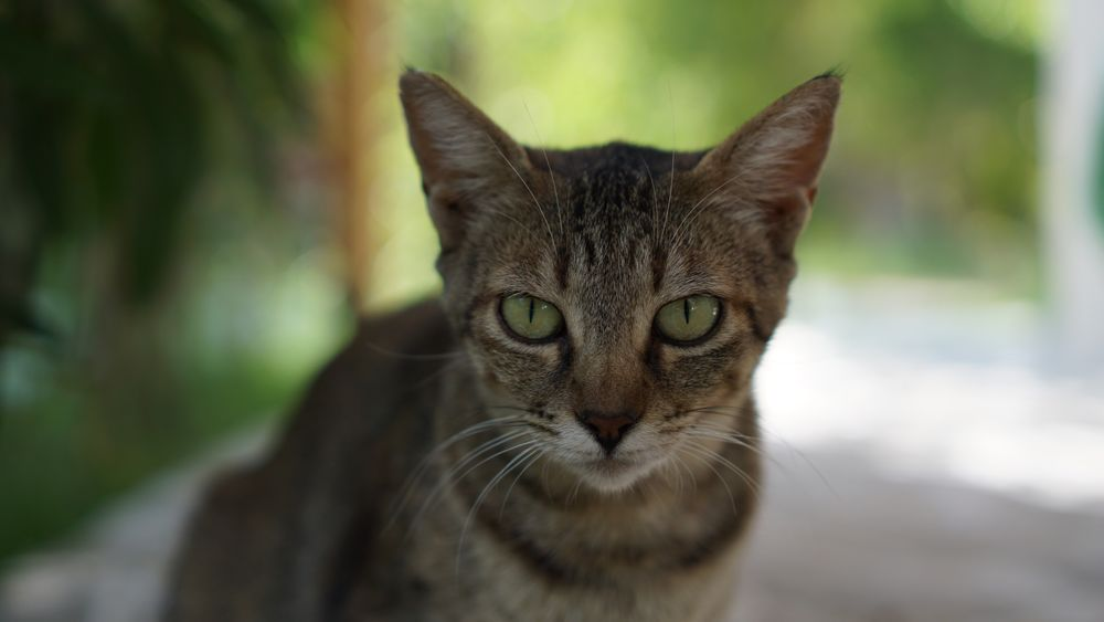 Pet Portraits The Week On EyeEm EyeEmNewHere Greece Messina Koroni Outdoors No People Portrait One Animal Animal Themes Nofilter Katze Cat Focus On Foreground Close-up Pet Portraits The Week On EyeEm EyeEmNewHere