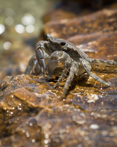 Animal Animals Animallovers Crab Wet Water Ocean Cancer Sea Lobster Reptile Water Close-up UnderSea Sea Life Claw Crab - Seafood Hermit Crab Animal Shell Wetland