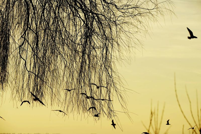 Abendstimmung Moewe Seagull Move The Photojournalist - 2019 EyeEm Awards Bird Flying Flock Of Birds Agriculture Water Sky Close-up Bird Of Prey Animal Migration Eagle - Bird Eagle Spread Wings