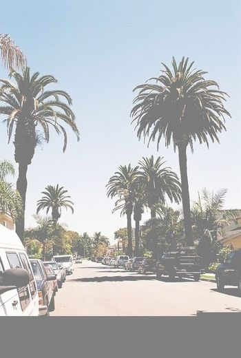  Palm Trees