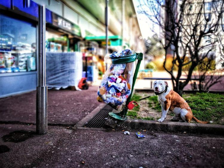 L'année du chien 🐕. Bonne fête du Têt... (Chacun célèbre à sa façon 🙄). Tết #fetedutet Streetphotography Streetphoto_color China Culture Dog Pets Day No People Domestic Animals Outdoors