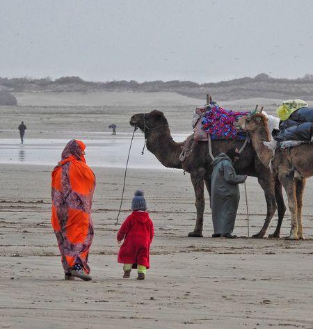 Walking The Beach Child Mother Morocco Essaouira Colorful Colors Of Life Dromedary Camel Beach Sea