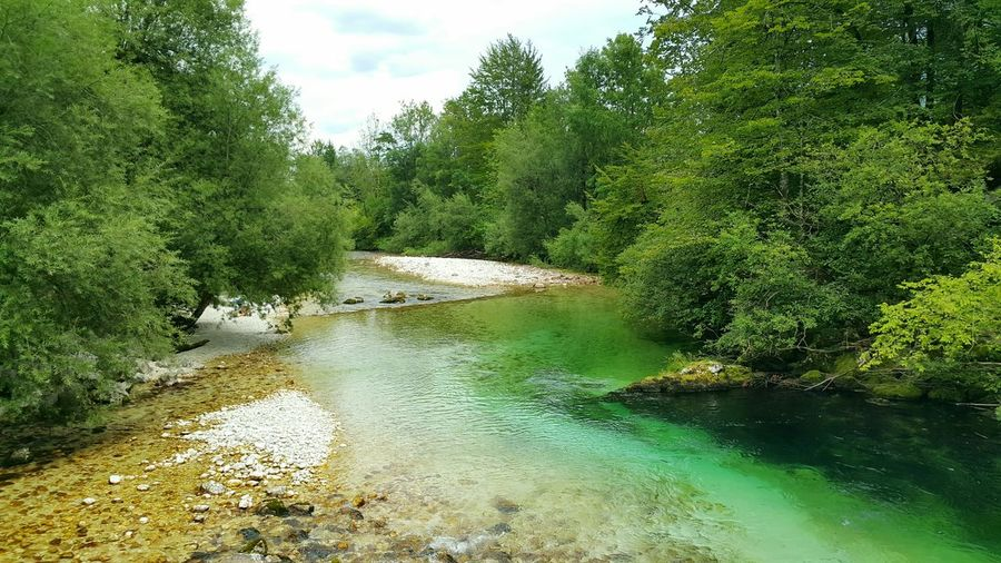 Bohinj, Slovenia Bohinj, Slovenia Bohinj Bohinjsko Jezero Bohinjlake Water Tree River Non-urban Scene Outdoors Flowing Water Nature Beauty In Nature Green Color Green Tranquil Scene Tranquility Day