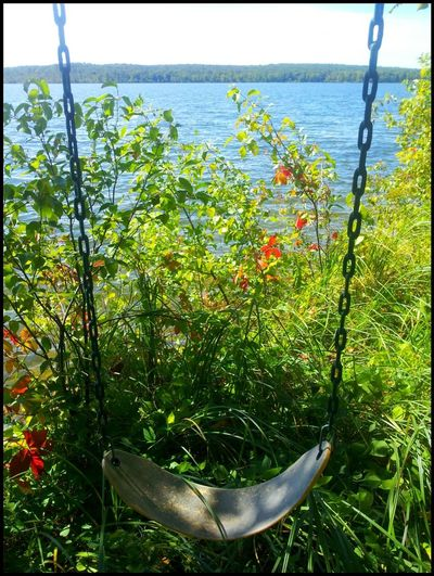 Dreaming of a summer day 💚pic taken Roy Lake Mn summer 2015 Growth Water Nature Sea Day Beauty In Nature No People
