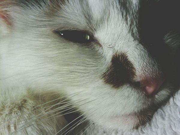 Cat Sleepy Cat Animal My Fur Baby