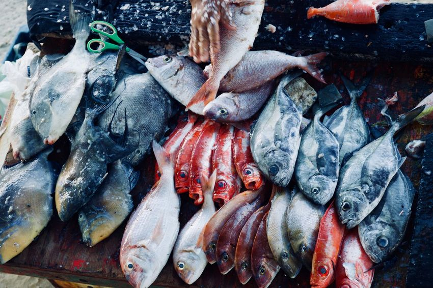 Fish Market Guarapari Seafood Sushi Abundance Animal Close-up Fish Fish Market Fishing Fishing Industry Food Food And Drink For Sale Freshness Healthy Eating Market Omega 3 Omega 3 Fatty Acids Raw Food Retail  Sale Sea Seafood Vertebrate Wellbeing Plastic Environment - LIMEX IMAGINE