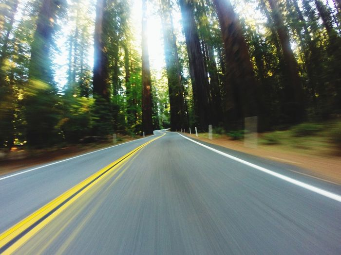 Highway 1 California Redwoods California Coast Beauty In Nature Low Angle View Landscape_Collection Travel No People Scenics Speed Light Photography GoPro Hero3+ Goprophotography Around_the_world Bigfoot Streetphotography EyeEmNewHere The Week On EyeEm Been There. Connected By Travel An Eye For Travel
