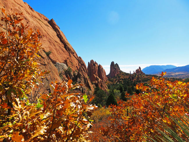Autumn Beauty In Nature Blue Change Clear Sky Colorado Day Garden Of The Gods Growth Landscape Leaf Mountain Mountain Range Nature No People Outdoors Plant Scenics Sky Sunlight Tranquil Scene Tranquility Travel Destinations Tree