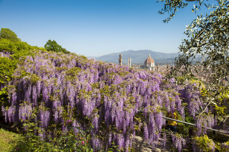 The Bardini garden Architecture Beauty In Nature Built Structure Day Flower Flowering Plant Freshness Growth Land Lavender Mountain Nature No People Outdoors Plant Purple Scenics - Nature Sky Springtime Tranquil Scene Tranquility Tree