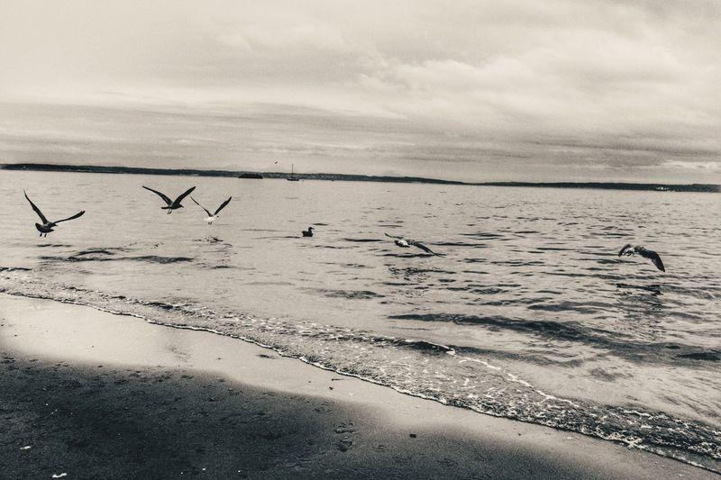 Seagulls flying over beach against sky