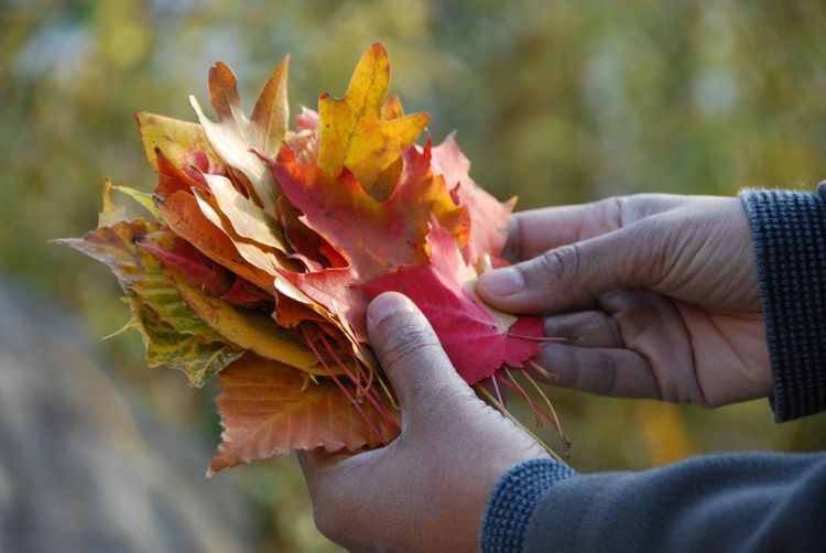 Cropped hands holding leaves during autumn