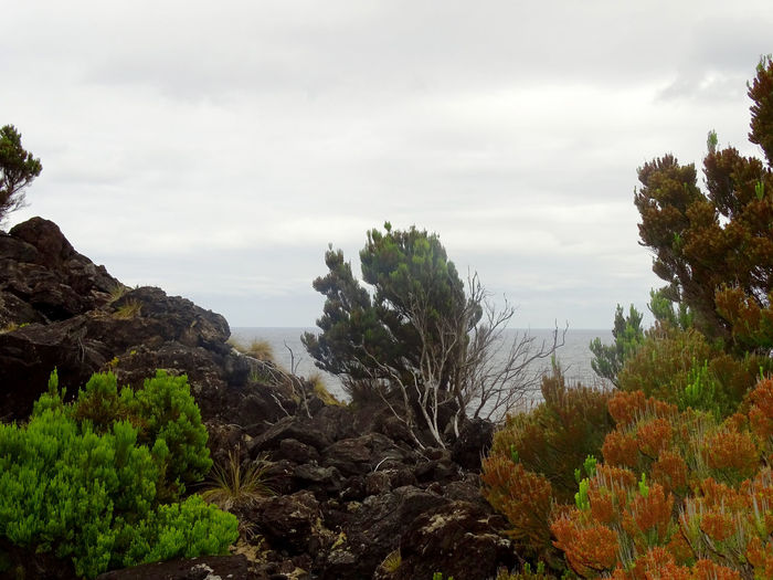 Tree Tree Area Forest Pinaceae Sky Cloud - Sky Plant Wilderness