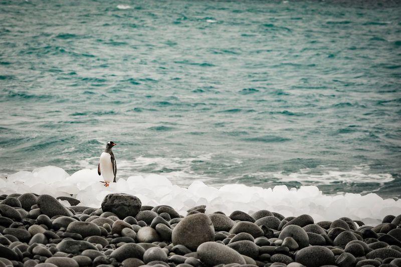 Man standing on rocks at beach