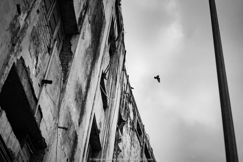 sky of kolkata Bird Flying Sky Outdoors Animals In The Wild First Eyeem Photo