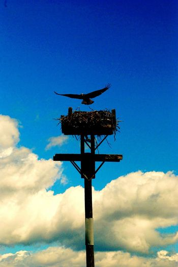 All American Sunny Day Sun Birds Bird Photography Soaring Flying