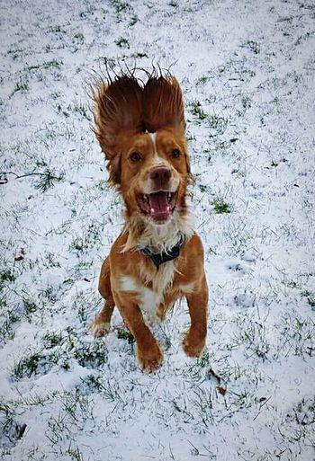 Taken last winter 😊 My Dog Cockerspaniel Daftdog Snowday I Love My Dog Furbaby