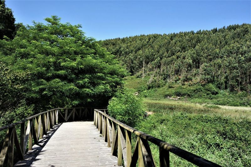 Wooden bridge - beautiful way to the beach ♥️ Travel Traveladdicted Vanlife Vanlifediaries Wooden Bridge Way To The Beach Blue Sky No Clouds Beauty In Nature Nature_collection Nature Photography EyeEm Best Shots Discover Spain Discovery Northspain Coastline Atlantic Ocean Happy Moments Tree Clear Sky Sunlight Sky Green Color Footbridge Bridge - Man Made Structure Countryside EyeEmNewHere My Best Travel Photo