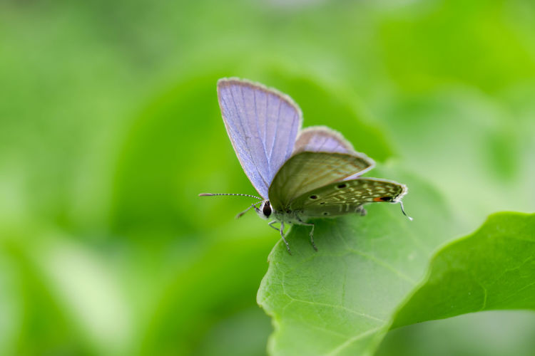 Butterfly Macro Insect Nature Green Color Nature Photography Beauty In Nature Leaf Close-up One Animal No People Nature_collection Relaxing Nikon Animal Themes Butterfly - Insect