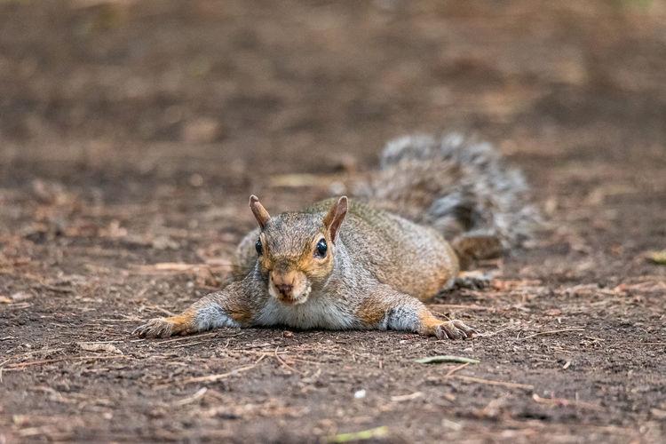 Portrait of squirrel on rock