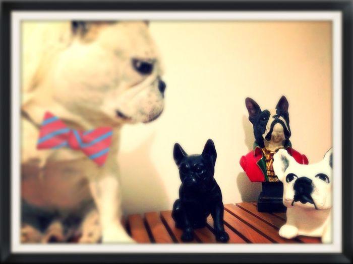 Frank & his litlle Friends ... ??? First Eyeem Photo