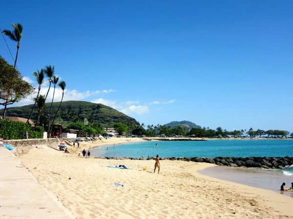 Beach Sea Palm Tree Sand Water Vacations Sunny Clear Sky Relaxation Travel Destinations Coastline Tranquil Scene Leisure Activity Beauty In Nature Backgrounds Postcard Picture Landscape_photography Landscape_Collection Beach Photography Beach Life Sand & Sea Outdoors Hawaii Hawaii Nei My Hometown