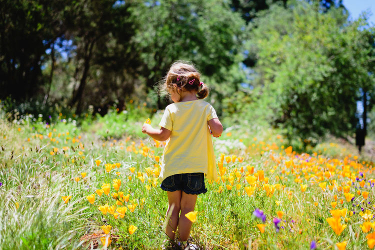 Small child on a sunny day in a field of flowers Memories Nature Travel Casual Clothing Child Childhood Childhood Memories Childs Play Day Field Fine Art First Eyeem Photo Flower Flowering Plant Growth Innocence Land Leisure Activity Nature One Person Outdoors Plant Tree Wondering Yellow