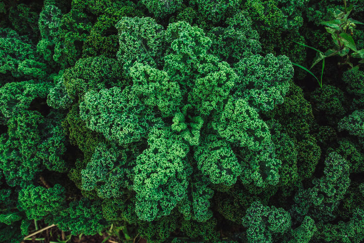Nature Nature Photography Kale Kaleidoscope Orchard Organic Food Pattern Permaculture
