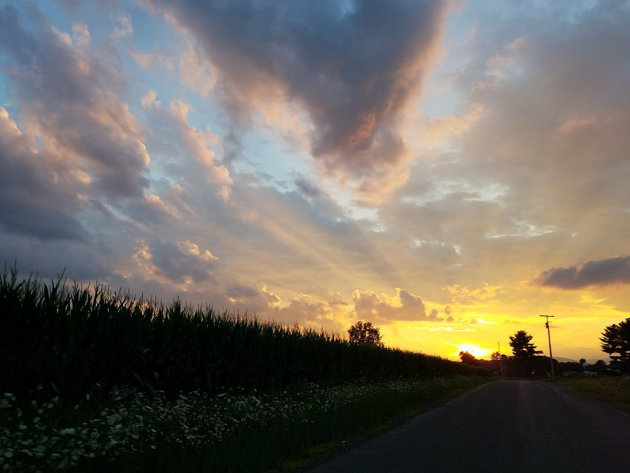 sunset, road, sky, the way forward, cloud - sky, scenics, nature, transportation, tranquil scene, beauty in nature, tree, tranquility, no people, silhouette, outdoors, landscape, growth, day