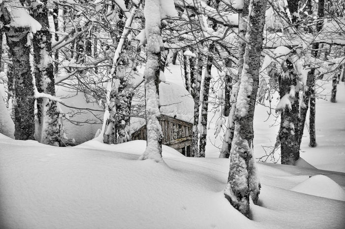 Maxepersonalphoto Lifeintechnicolor Gennaio  2018 HDR Italia Suditalia Paesaggio Blackandwhite Biancoenero Neve Winter Snow Tranquil Scene EyeEmNewHere Landscape Eyem Best Shots Eyemphotography EyeEm Nature Lover Eye4photography  Shades Of Winter Tree Day Outdoors Snow Nature No People