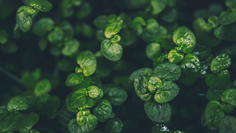 Close-up of wet green plants