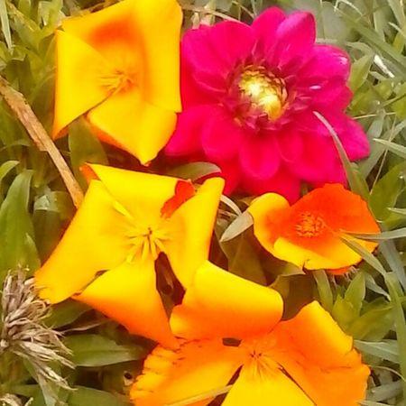 Flowers , Stoykite