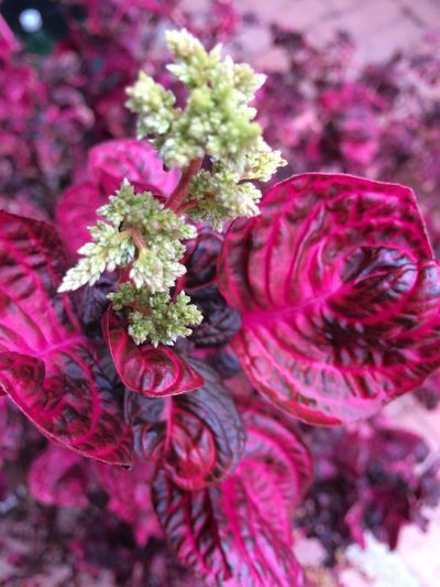 Plant Freshness Flowering Plant Flower Close-up Beauty In Nature No People