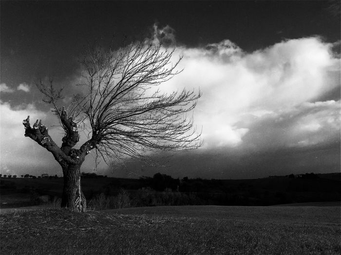 Tree Single Tree Blackandwhite Black And White Wind Disbalance Lonely Tree Lonely Stand Tall Showcase March Mobiography AMPt_Nature Landscape Italy Eyeem Market Amputierter Baum Amputation Heavy Sky Clouds Drama Clouds And Sky EyeEm Nature Lover Melancholic Landscapes Outdoors