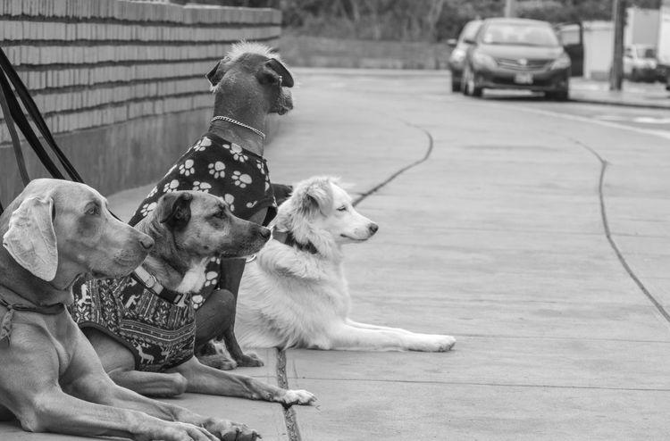 perros descansando luego de un paseo EyeEm Selects Dog Pets Animal Domestic Animals Sitting Outdoors Friendship Mammal Day Animal Themes