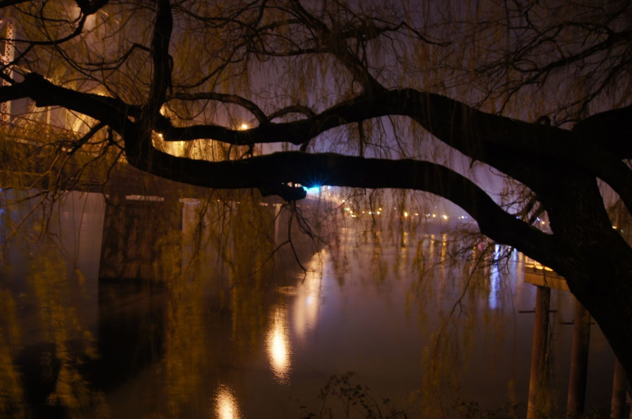 tree, bare tree, branch, reflection, nature, silhouette, beauty in nature, outdoors, illuminated, tranquility, water, scenics, lake, forest, no people, winter, night