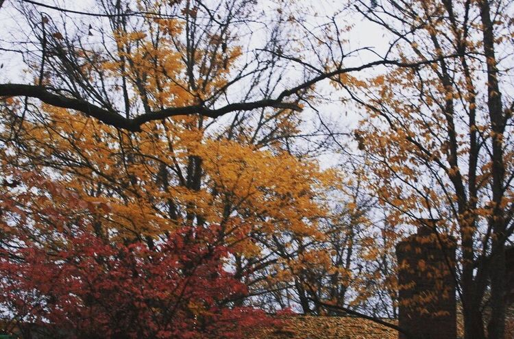 Tree Low Angle View Nature Change Autumn Beauty In Nature Branch No People Growth Outdoors Day Scenics Sky