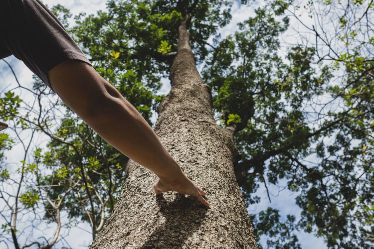Low angle view of person on tree against sky