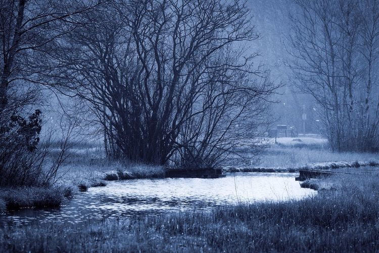 Edited Bare Tree Blue Feelings Branch Cold Cold Temperature Covered Covering Day Forest Frozen Misty Monochrome Outdoors Season  Snow Tranquility Tree Tree Trunk Weather Winter
