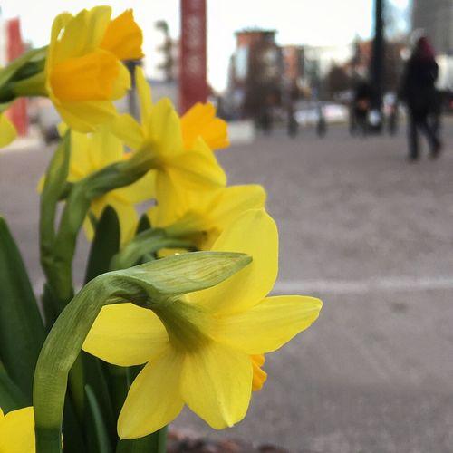 Urban Spring