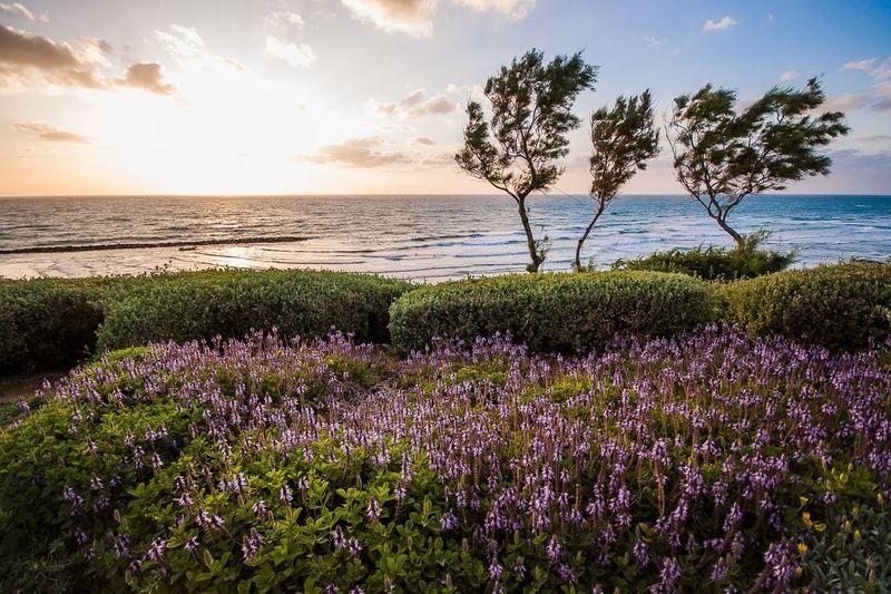 Traveling Travel Travelling Travel Photography DmitryBarykin Israel Landscape Landscape_Collection Sunset Sea